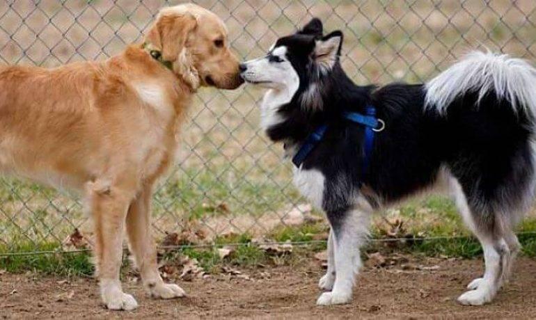 imagen relacionada perro en celo