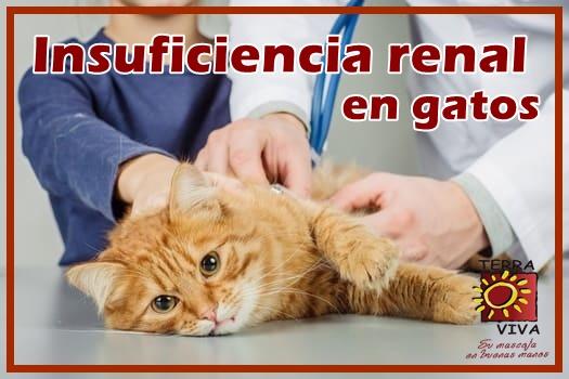 imagen relacionada con problemas renales en gatos
