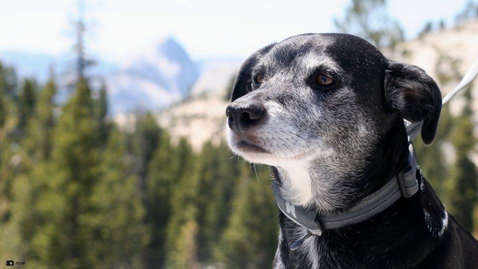 imagen relacionada con cuidados perros senior