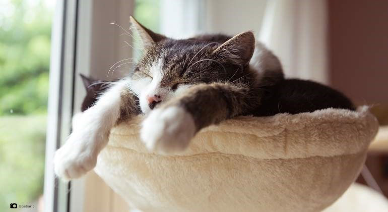 imagen relacionada con gato aburrido
