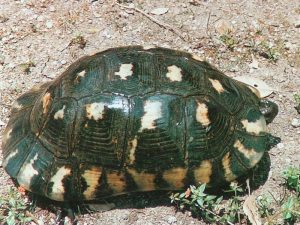 imagen relacionada con la hibernación de las tortugas