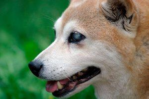 imagen relacionada con perros ciegos