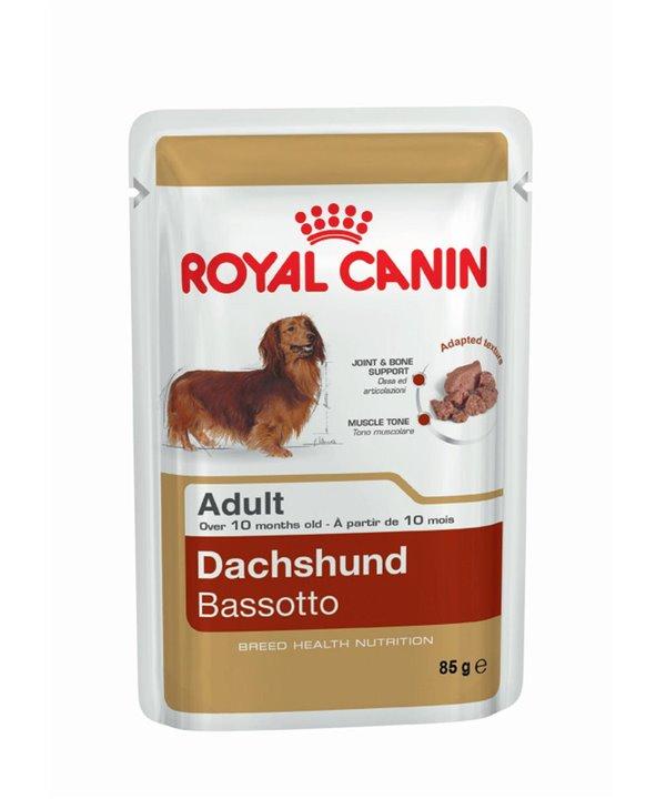 DACHSHUND ADULT