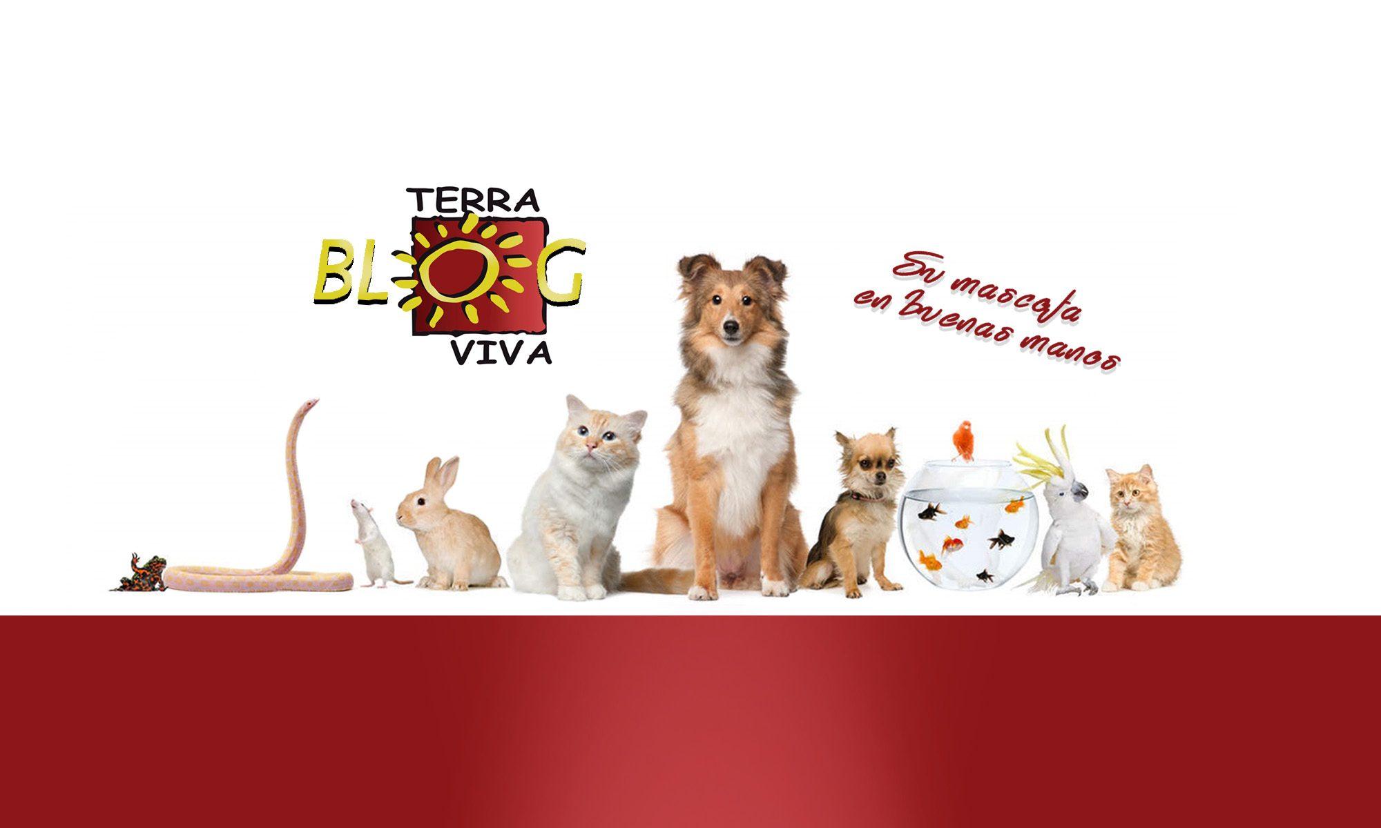 Blog terraviva